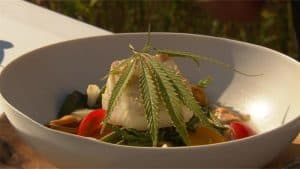 koken met hennep